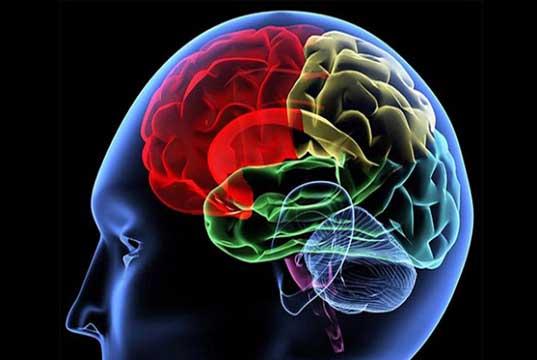 Agar Otak Tetap Cerdas. Tajam dan Fokus