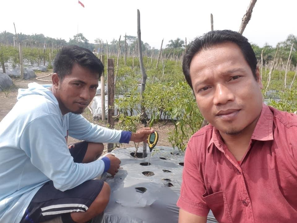 Penggiat komoditi Tan Cabe di Desa Kepenuhan Raya