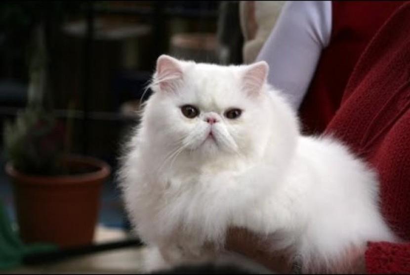 Kisah Penyayang Kucing